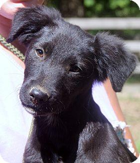 Golden Retriever/Labrador Retriever Mix Dog for adoption in Pewaukee, Wisconsin - Jackson