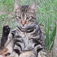 Adopt A Pet :: Bermuda - Zolfo Springs, FL