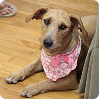 Adopt A Pet :: Sandy - Knoxville, TN