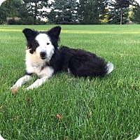 Adopt A Pet :: Lily - WAterford, WI