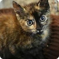 Adopt A Pet :: josephine - Aiken, SC