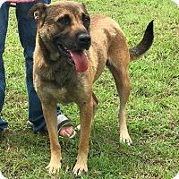 Adopt A Pet :: Jen - Southbury, CT