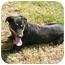 Photo 2 - Labrador Retriever/Rottweiler Mix Dog for adoption in Patterson, California - MEG