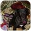 Photo 2 - Setter (Unknown Type)/Labrador Retriever Mix Puppy for adoption in Marietta, Georgia - Jansen