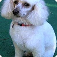 Adopt A Pet :: Daisy - Dover, MA