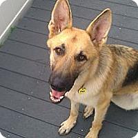 Adopt A Pet :: Beau - Green Cove Springs, FL