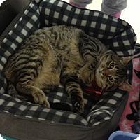 Adopt A Pet :: Paco - Byron Center, MI