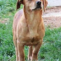 Adopt A Pet :: Loki - Johnson City, TN