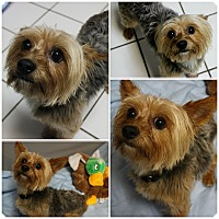 Adopt A Pet :: Jax - Forked River, NJ