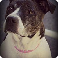 Adopt A Pet :: Roosy - Fredericksburg, VA