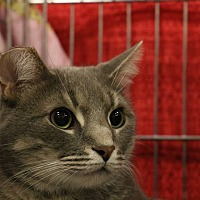 Adopt A Pet :: Finn - Middletown, OH