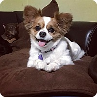 Adopt A Pet :: Pita - Davie, FL