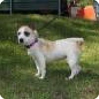 Adopt A Pet :: Rae - Rexford, NY
