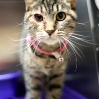 Adopt A Pet :: meadow *Petsmart GB* - Appleton, WI