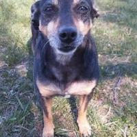 Adopt A Pet :: Tiny *in foster* - Valley Falls, KS
