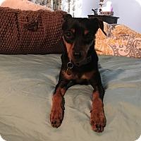 Adopt A Pet :: Josie - Malaga, NJ