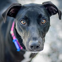 Adopt A Pet :: Coco - St. Petersburg, FL