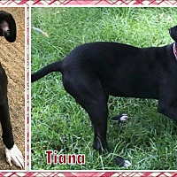 Adopt A Pet :: Tiana - Ringwood, NJ