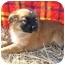 Photo 1 - Husky Mix Puppy for adoption in Marion, North Carolina - Nala
