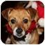 Photo 1 - Beagle/Terrier (Unknown Type, Small) Mix Dog for adoption in San Pedro, California - Lola
