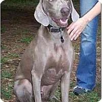 Adopt A Pet :: **ADOPTED**  Zeke - Eustis, FL