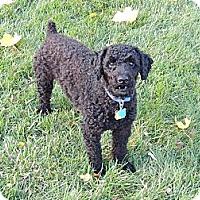 Adopt A Pet :: Tigger - Adoption Pending - Mt Gretna, PA