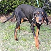 Adopt A Pet :: Bluebird - Dallas, TX