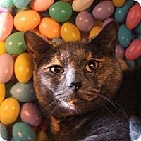 Adopt A Pet :: Daisy - Albany, NY