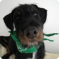 Adopt A Pet :: O'Malley - Monteregie, QC