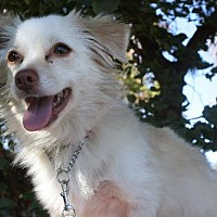 Adopt A Pet :: KONA - Elk Grove, CA