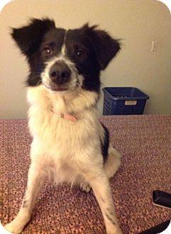 Border Collie Mix Dog for adoption in San Diego, California - Bandida