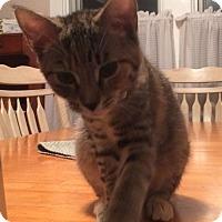 Adopt A Pet :: Marley - Horsham, PA