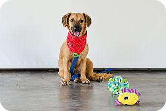 Labrador Retriever Mix Dog for adoption in Vancouver, British Columbia - Sandy