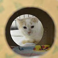 Adopt A Pet :: Sailor - Medina, OH