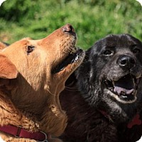 Adopt A Pet :: Bella & Pearl - Potomac, MD
