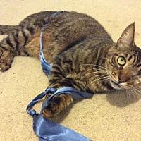 Adopt A Pet :: Hazey - Hallandale, FL