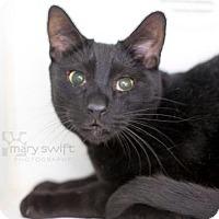 Adopt A Pet :: Adam - Reisterstown, MD