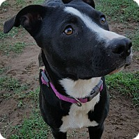 Adopt A Pet :: Jenni - Las Cruces, NM