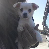 Adopt A Pet :: 3 legged Hope - Sacramento, CA