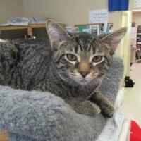 Adopt A Pet :: Tiko - Erie, PA