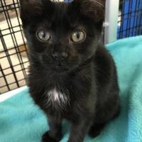 Adopt A Pet :: Bailey - Washington, IA