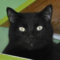 Adopt A Pet :: Frank - Suwanee, GA