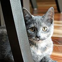 Adopt A Pet :: Kumquat - Troy, MI