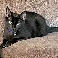 Adopt A Pet :: VADER - Burlington, NC