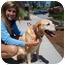 Photo 4 - Labrador Retriever Mix Dog for adoption in Cumming, Georgia - Cal