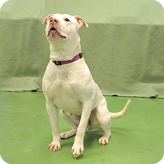 Terrier (Unknown Type, Medium) Mix Dog for adoption in South Haven, Michigan - Marilyn Monroe