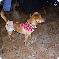Adopt A Pet :: Troy - Lawndale, NC
