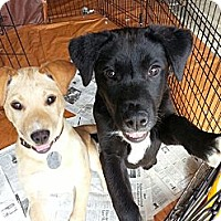 Adopt A Pet :: Pam - South Jersey, NJ