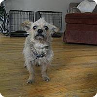 Adopt A Pet :: Terrry - Charlotte, NC
