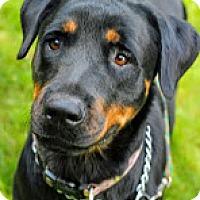 Adopt A Pet :: Deeogi - Tinton Falls, NJ